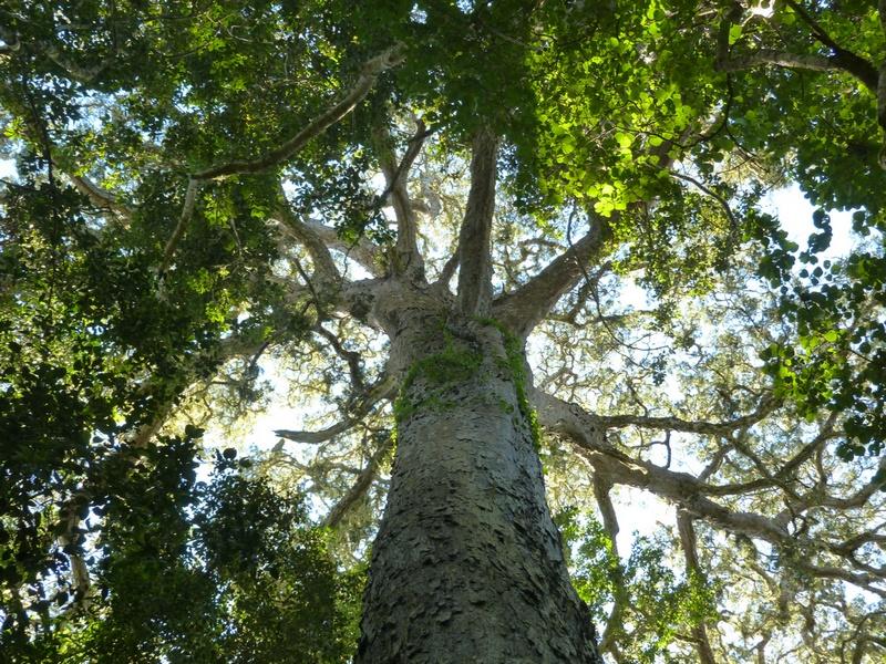 vue plogeante sur des branches